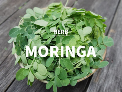 모링가 (Moringa)(BodyShop Type)